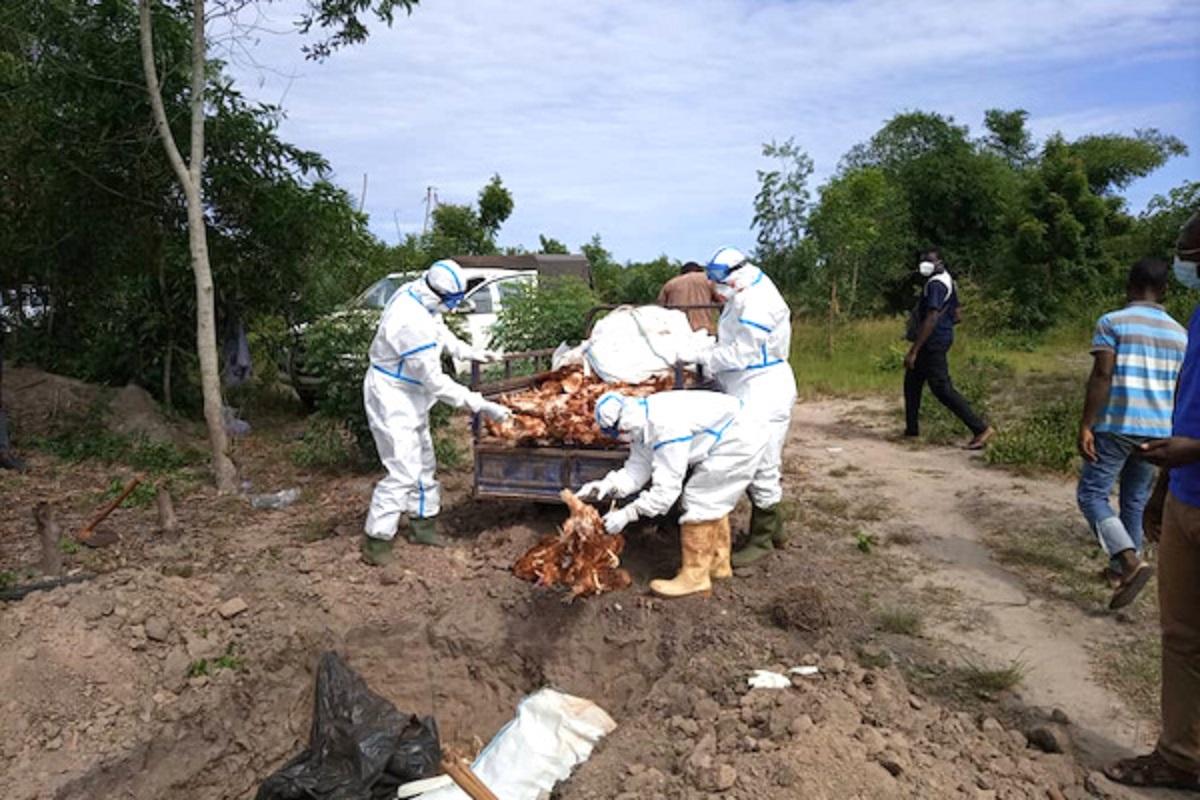 Grippe aviaire au Togo